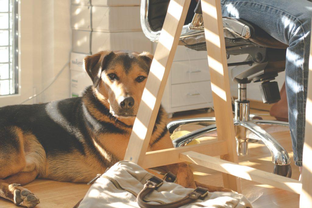 office-dog-on-floor